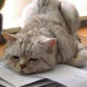 Лечение хронической усталости