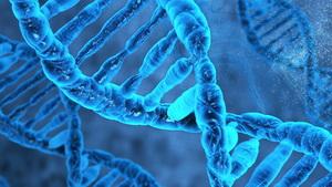 Геном. Попытка графического отображения реальности
